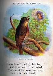 Robin's Courtship