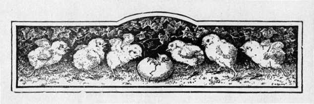 Chicks & Hatching Egg