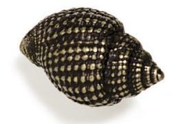 Modern Objects Mini Snail Cabinet Knob