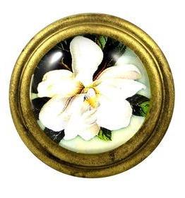 Charleston Knob Company Magnolia Signature Brass Cabinet Knob