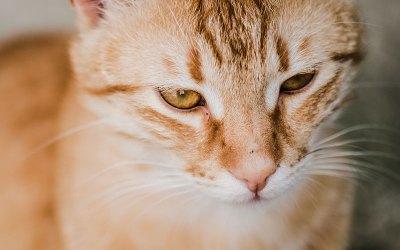 Qui dit mois de Mars dit prévention contre les tiques pour les chiens et les chats