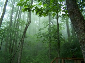Asheville Vacation Rentals - Cabin In Asheville Image