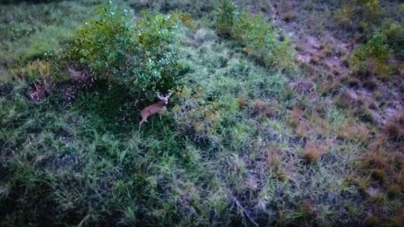 A buck is pictured by an unmanned drone in footage uploaded by a company based in Portage, Indiana