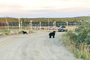 A bear sighting in Yellowknife on Thursday, August 9 2018