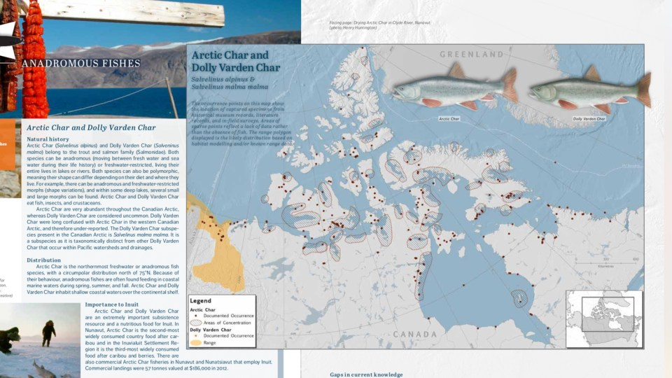Pages from Canada's Arctic Marine Atlas show the locations of Arctic char