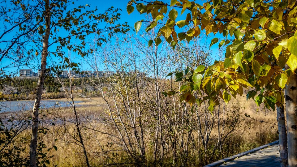 Yellowknife's Summit housing development is seen through foliage along the Rotary Park boardwalk