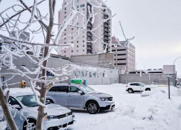 Hoarfrost gathers on the branches of a tree next to. a vacant lot in downtown Yellowknife in February 2019