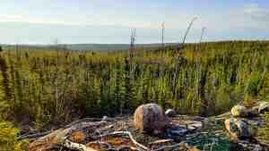 An area of boreal forest near the Thaidene Nene National Park Reserve