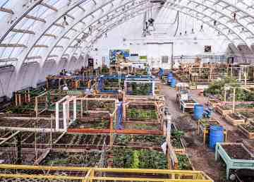 Inuvik's community greenhouse