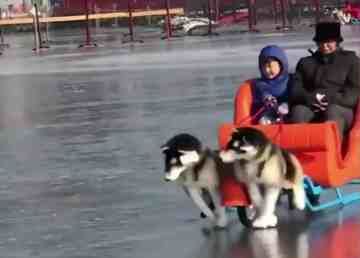 A screengrab of a South China Morning Post video shows electric dog sleds
