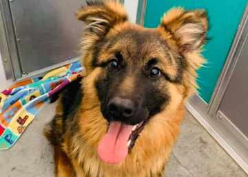 Ten-month-old Sasha arrived at the SPCA on Wednesday. Photo: NWT SPCA