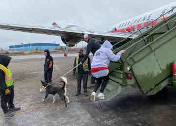 Sled dogs owned by Iditarod champion Thomas Waerner enjoy a leg stretch at Yellowknife Airport on Monday, next to a vintage DC-6 aircraft