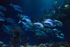 animal, aquarium, aquatic