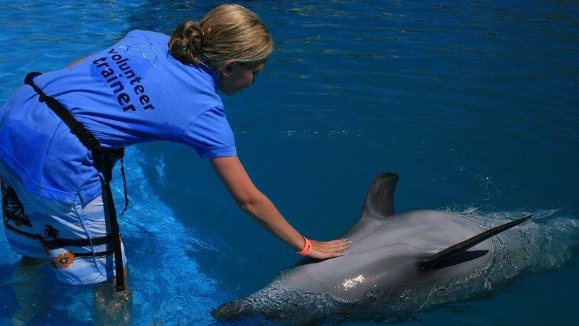 discounted Cabo Dolphin trainer for a day program with cabo adventures cabosanlucastours cabo san lucas tours