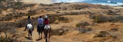 cabo horseback riding in cabo through the mountains near migrino beach with cactus atv tours los cabos