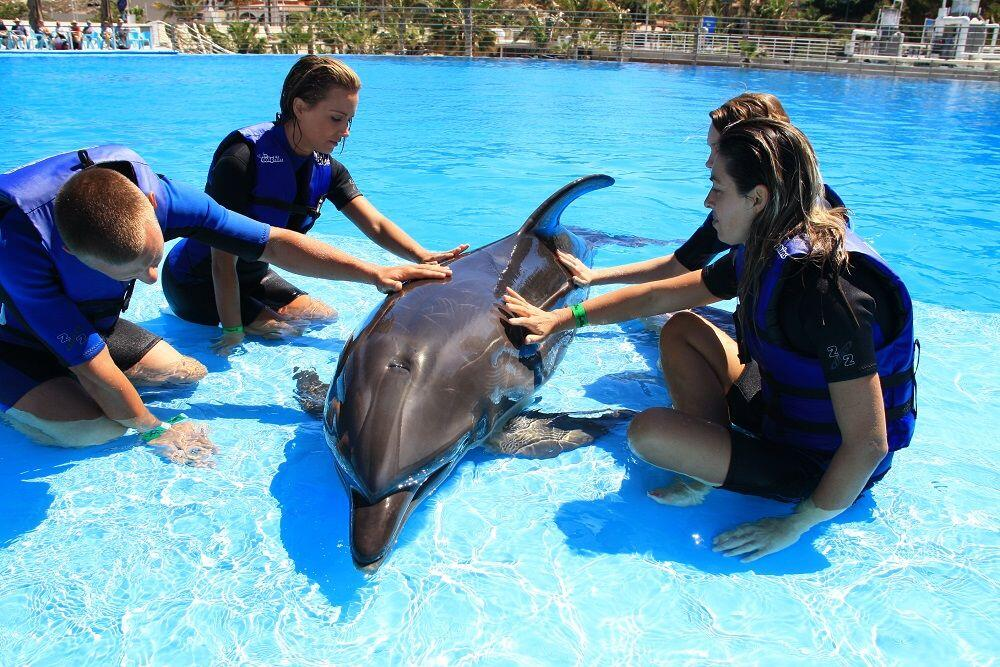 feel a connection with a dolphin during the dolphin encounters cabo tour