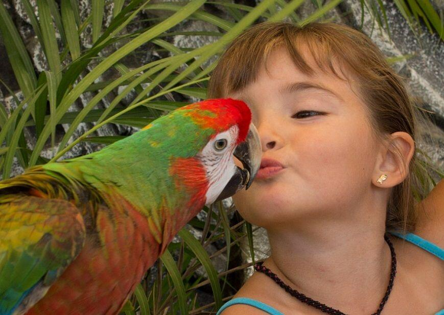 young girl kissing a macaw in wild canyon los cabos animal cabo san lucas land tours