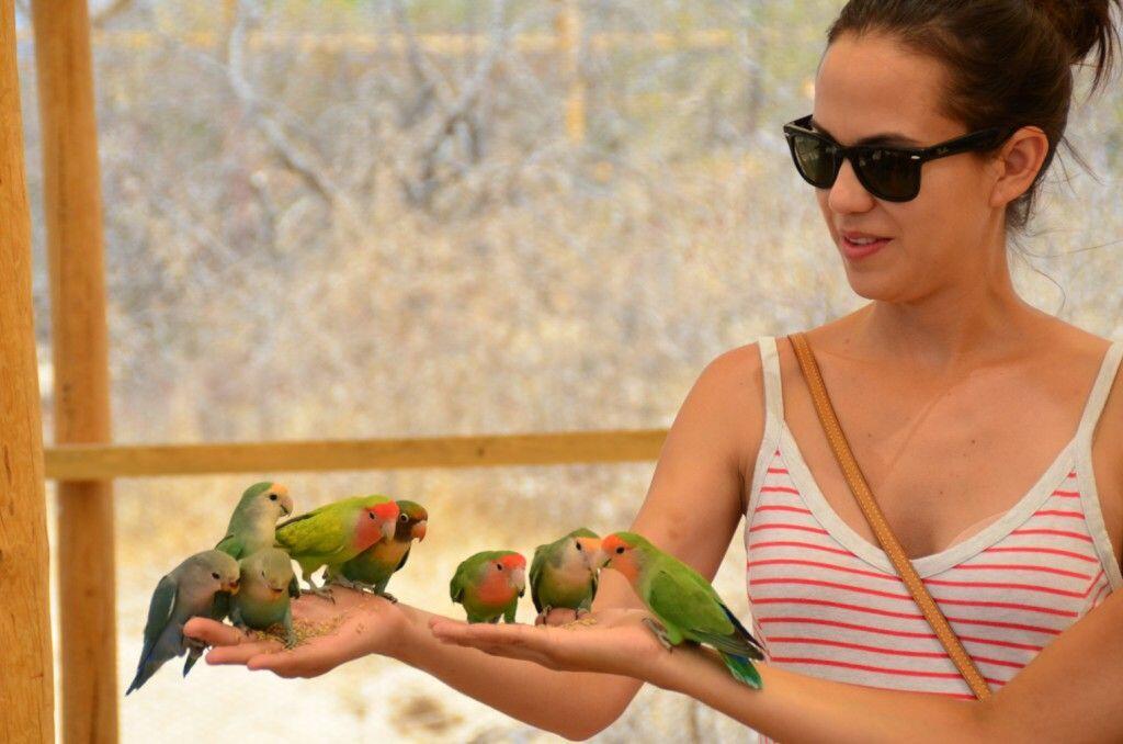 feeding-eight-lovebirds