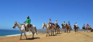 horse back riding in los cabos, enjoy beach riding and mountain riding for all levels