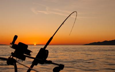 Come Sport Fishing in Cabo!