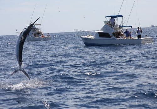 Bisbee's Los Cabos Offshore Fishing Tournament - Cabo Gringo Pages - Cabo  Directory and Guides Cabo Gringo Pages – Cabo Directory and Guides