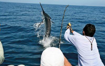 marlin fishing los cabos, sport fishing los cabos