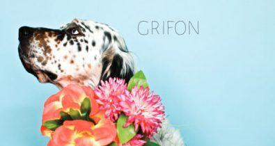 GRIFON - L'aiguille du loup