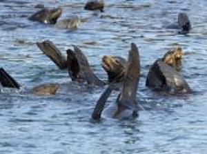 Palomino Islands Sightseeing Cruise Including Swim with Sea Lions