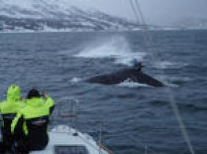 Whale Watching on a Catamaran from Tromso