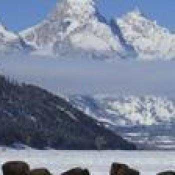 Jackson Wyoming Wildlife Tour of Jackson Hole - Afternoon 35441P13