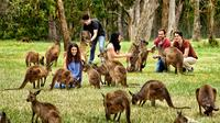 Full-Day Wildlife and Historic Hahndorf Tour from Adelaide