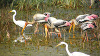 Sightseeing Transfer from Agra to Jaipur with Keoladeo Park