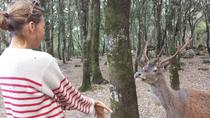 Excursão a pé na reserva natural de Cannoneris, Cagliari, Walking Tours