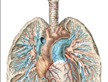 Clarify Updates to Diagnosis Coding of Pulmonary Diseases ...