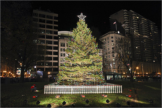 Image result for Boston Christmas Tree