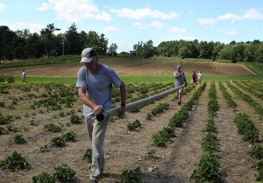 Bob Temple, a full-time Tuttle Farm worker; Lia Norman; Jenn Hall; and Tim Warren installed irrigation piping.