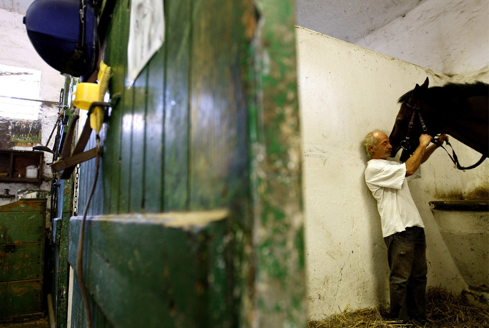 Horses At Work And At Play Photos The Big Picture
