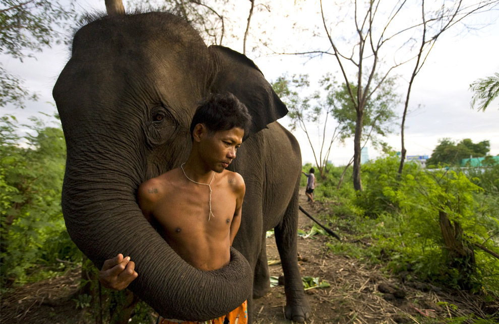 Unemployed elephant and his mahout in Thailand