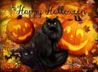 happy halloween cat photos