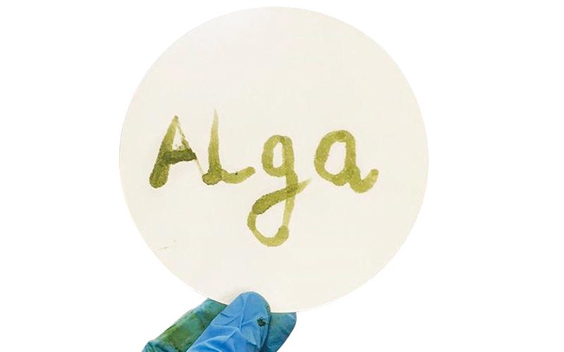 4 مهندسات يؤسسن «ألغا لايف» لإنتاج أحبار من الطحالب