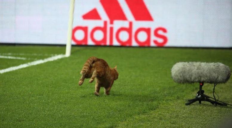 بالصور: قطة توقف مباراة في دوري أبطال أوروبا