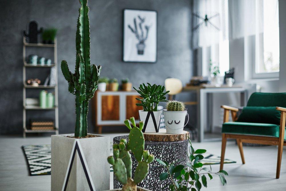 plante verte dans mon salon