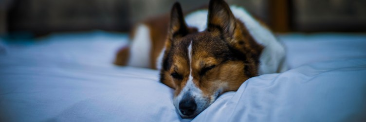 dog-friendly-vacations-midwest