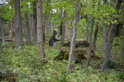 FW-DO: Feuerwehr fängt Kängurus im Grävingholzer Wald