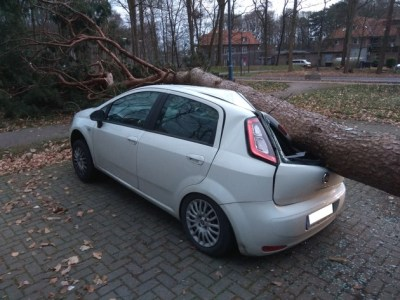 FW-KLE: Baum kracht im Sturm auf Autodach