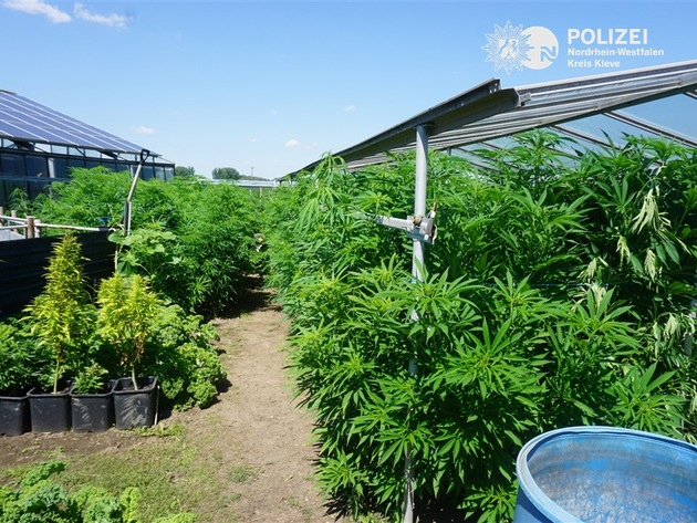 POL-KLE: Kevelaer-Winnekendonk - Hanfplantage in Gewächshäusern entdeckt / Hanfpflanzen sichergestellt
