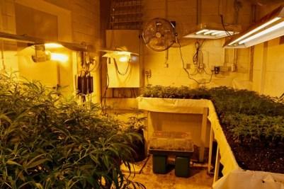 POL-ME: Illegale Cannabisplantage entdeckt: Polizei stellt rund 700 Pflanzen sicher - Mettmann - 2102020