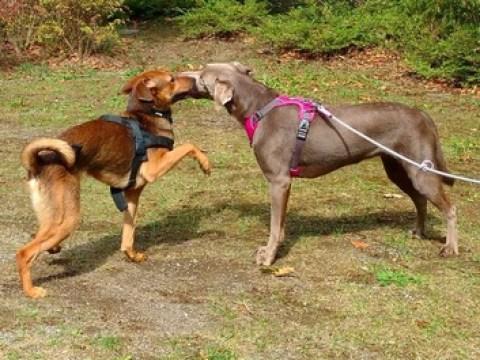 Online Hundeschule Witten ist sehr erfolgreich gestartet, viele Leistungen lassen sich online genauso gut durchführen