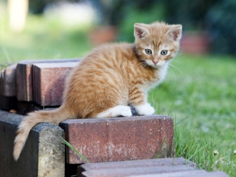 Regelmäßige Impfung schützt Hund und Katze ein Leben lang / Die Impfung ist wichtiger Bestandteil der Gesundheitsvorsorge bei Klein- und Heimtieren, und zwar lebenslang