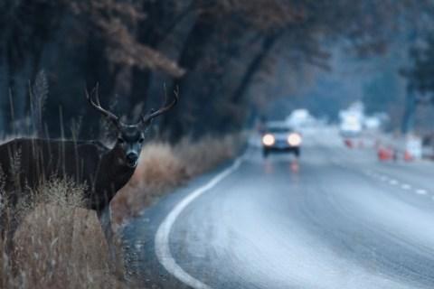 Wildunfälle vermeiden / DVR: Besser bremsen als ausweichen